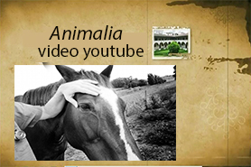 Link esterno youtube video animalia